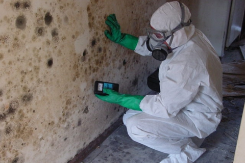 Mold removal in Toronto