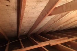 Kitchener Attic Mold Removal