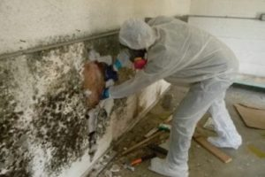 Our professionals removing black mold from a house.