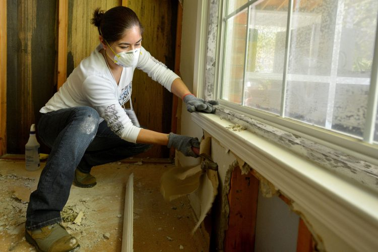 Why DIY Mold Removal In Toronto Is A Bad Idea